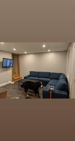 Bright and Comfortable Walk Out Basement Apartment