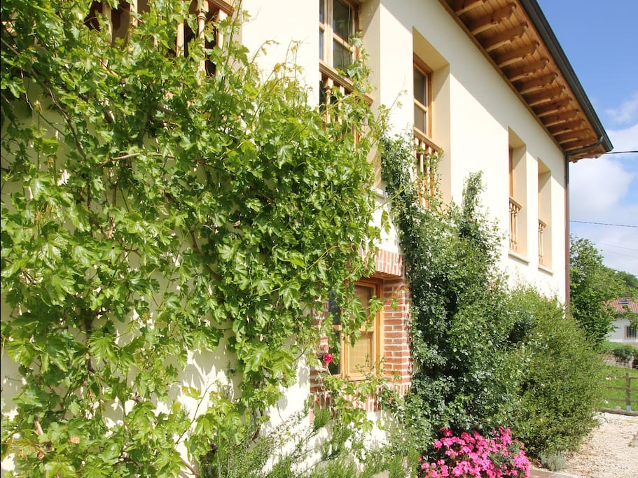 The house with vine -grapes are abundant in September.