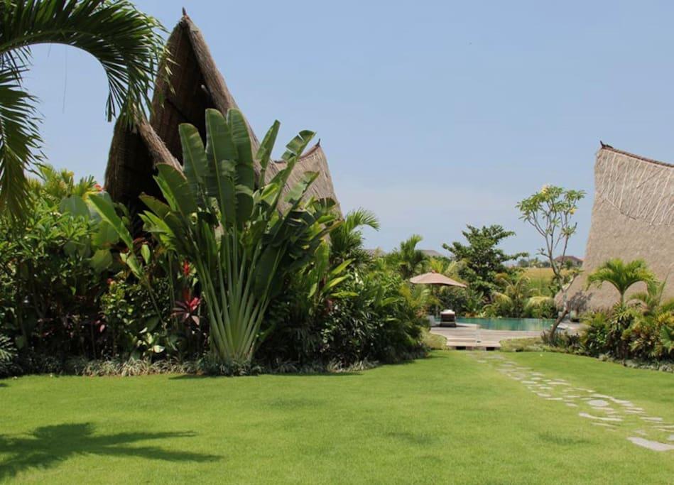 Wide garden view