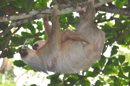 Beach villa surrounded by flowers and wildlife!