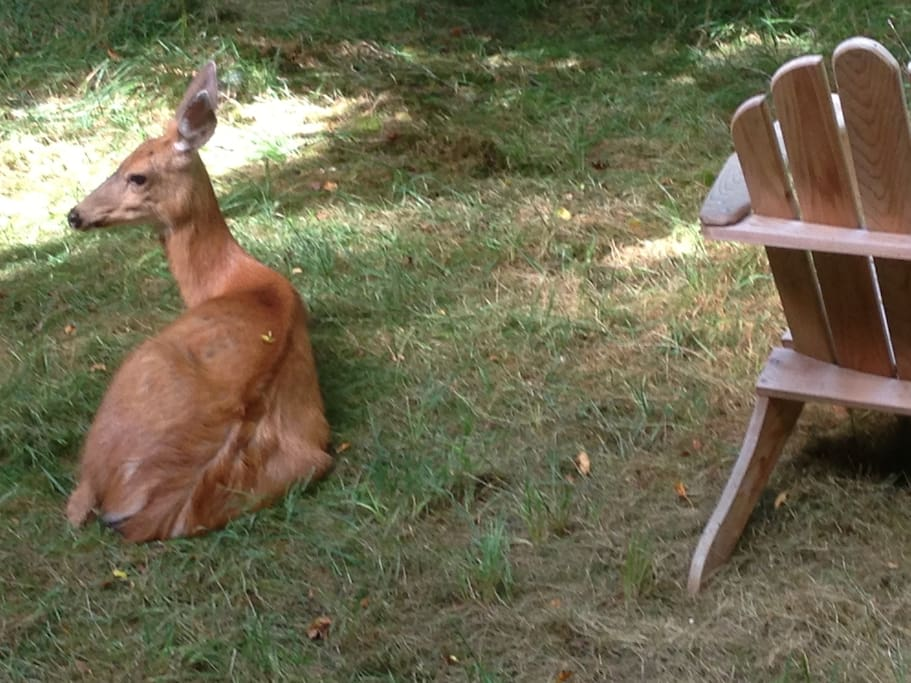 A gentle friend might sit beside your chair.