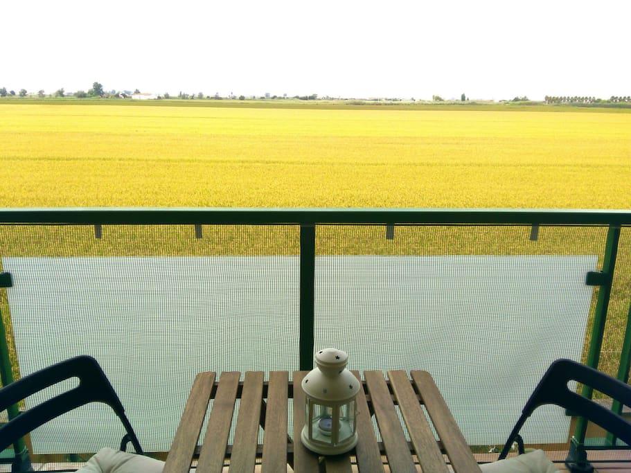 Vista a los arrozales desde la terraza