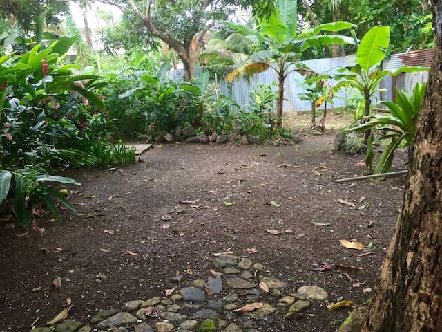 Tent space under a massive mango tree