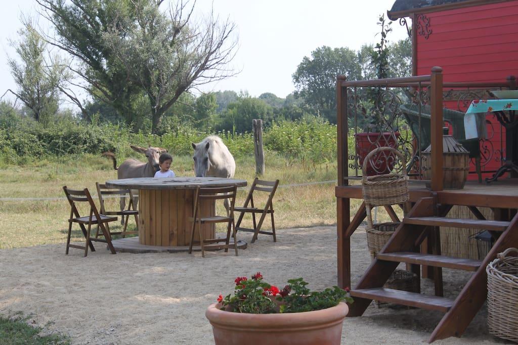 Terrasse avec vu sur les chevaux