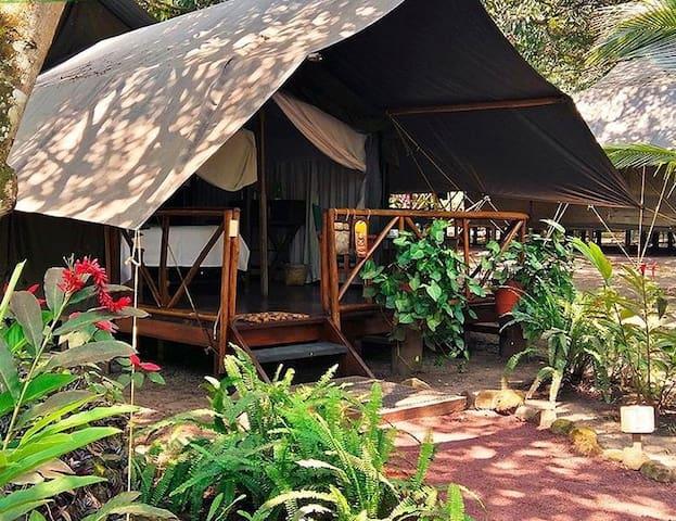 Suites para disfrutar en medio de la selva
