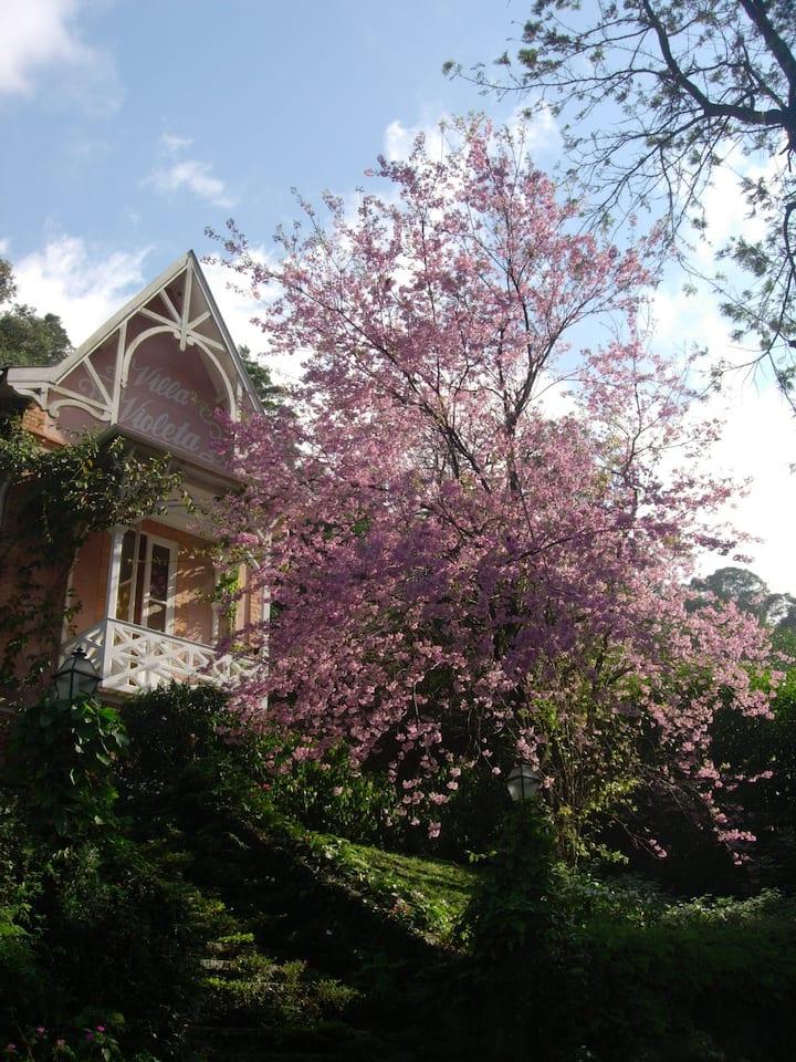 Villa Violeta - Natureza e charme