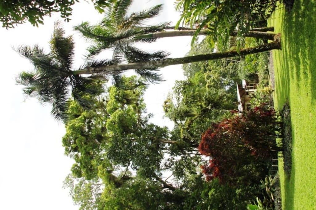 Loop rustig rond in de botanische tuin