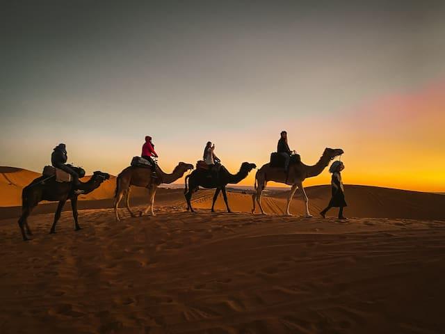 Sahara camel tours