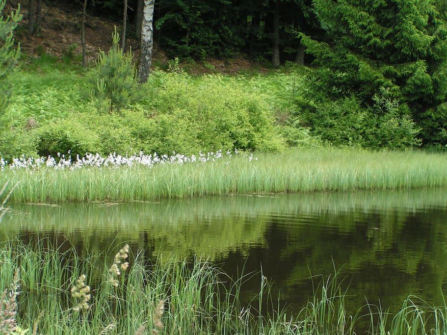 wandelen langs meren met uitgestrekte bloemenvelden