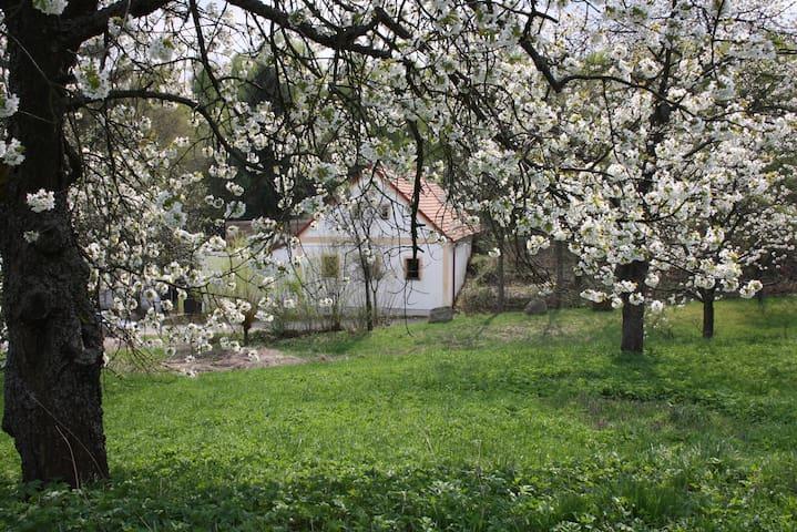 fijne woonboerderij grote tuin, kind vriendelijk - Staré Město pod Landštejnem - Dům