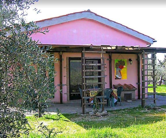 Rosa Haus inmitten des Olivenhains - Roccastrada - House