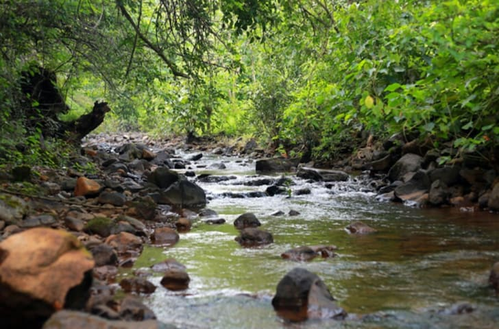 Nature Stay on Bank of The Koyna River