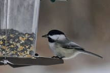 Birdwatching at our backyard feeders
