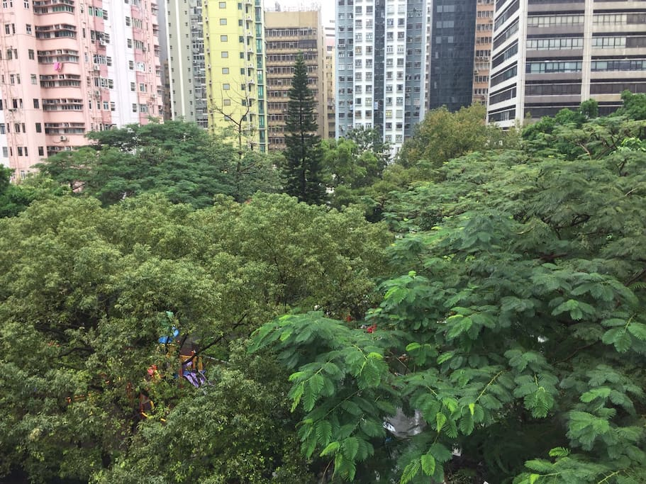 Tree top green view of Hollywood garden