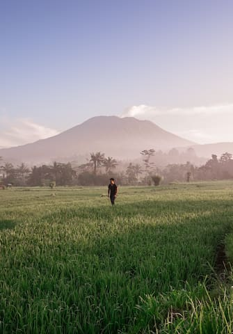 50 shades of green. Walk the rice fields of Bali.