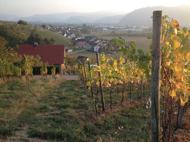 Mitten in den Weinbergen