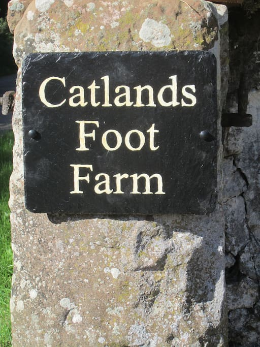Welcome to Catlands Foot Farm