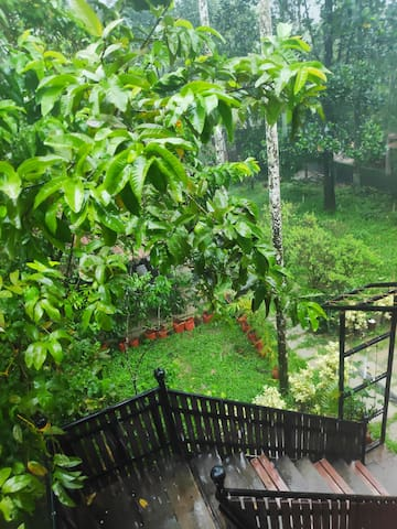 Forestree's Koovalam of Nature