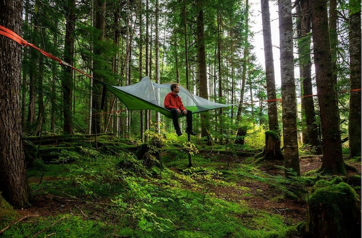 Tree camping in the woods