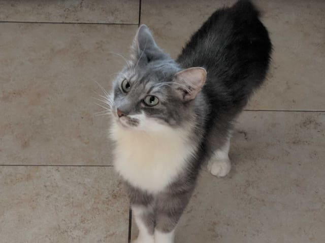 Chef the Cat - your cruise director!   Chef is a Manx breed cat, typically considered hypoallergenic. Most folks allergic to cats don't have a problem with him, but be sure you are ok with cats before booking.