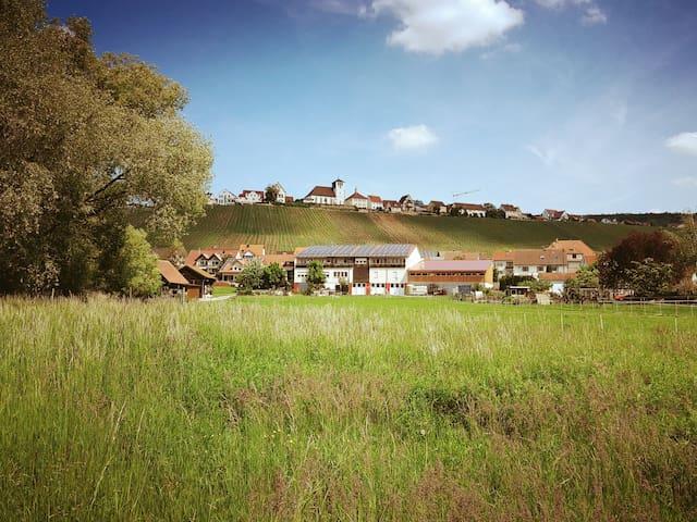 Wein und Natur hautnah genießen - Herzlich Willkommen in unserem Weingut (Foto Mitte) in Hohenhaslach!