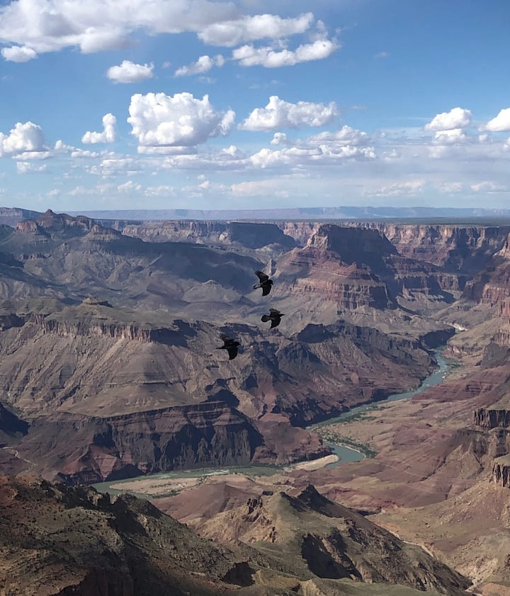 Ravens flying through the Canyon