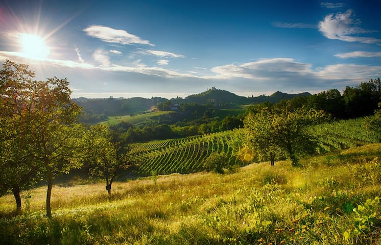 Gavi vineyards