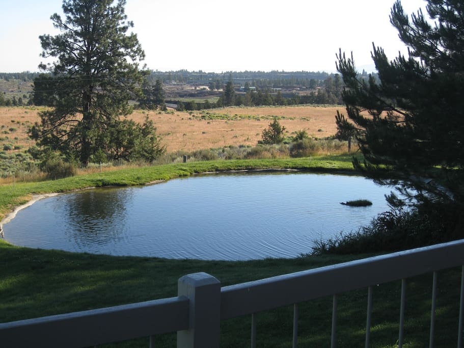 Pond views from hot tub