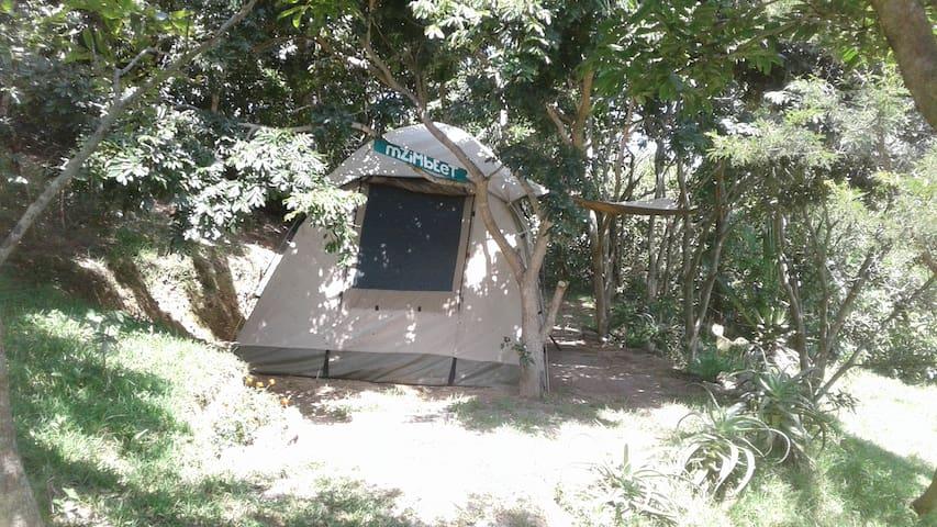 Jungle One Safari Tent