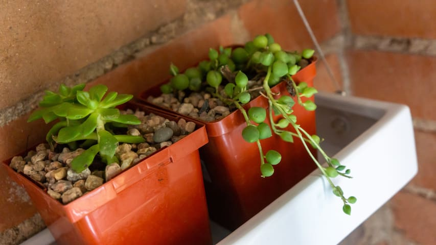 Hanging live planters help to purify the air and put a smile on your face.