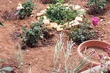 Communal areas - Garden