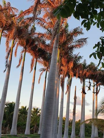 Sous le Manguier. ..Under the Mango tree