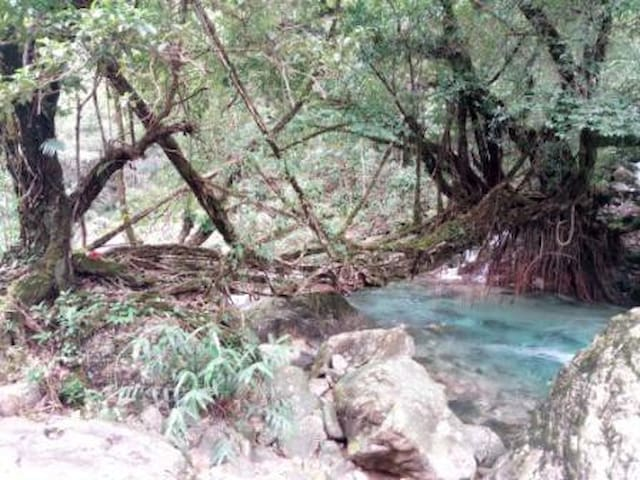 This photo is of one of the other sixteen living root bridges that are at Nongblai .