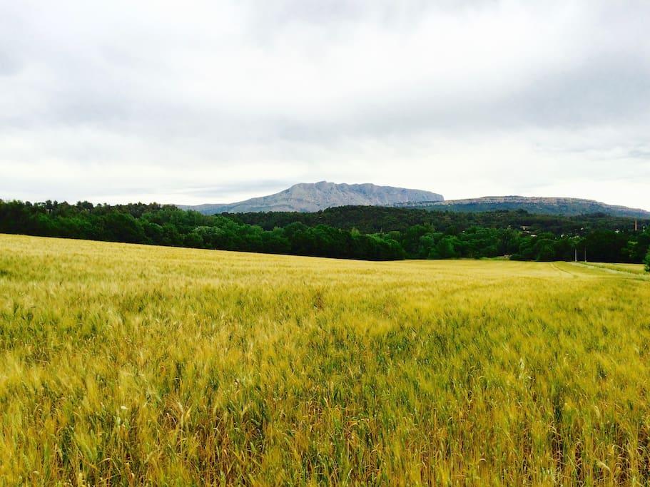 Au pied de la montagne Sainte Victoire