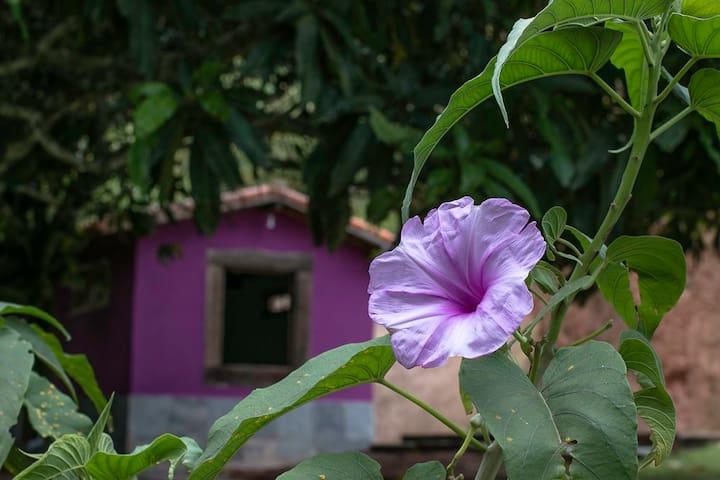 Uaná Etê Jardim Ecológico (Casa Quaresma)
