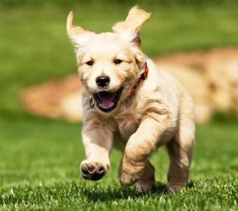 Dogs **TEST** - Jordan Valley