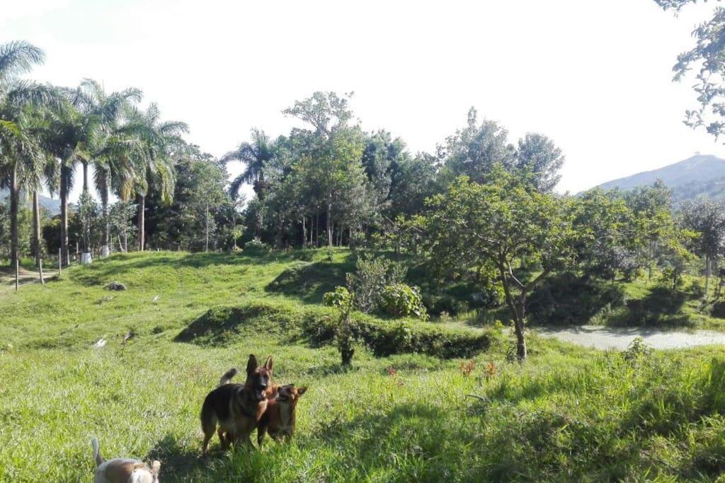 Zona aledaña a la laguna, árboles frutales.