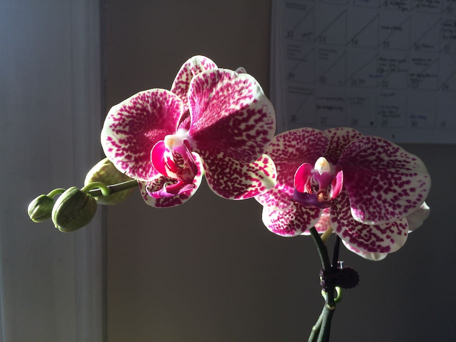 Orchids to brighten your day:-)
