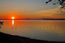 Canada Geese taking off at sunrise ..... It's a beautiful thing!