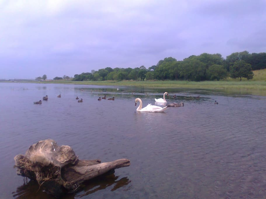 Lough Lannagh  Castlebar, refreshing breathing taking scenery, Walks Photography, Picnics
