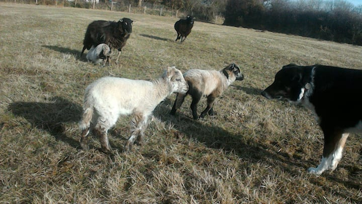 Cosy Shepherdess' Hut