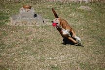 Sasha - our friendly and playful dog