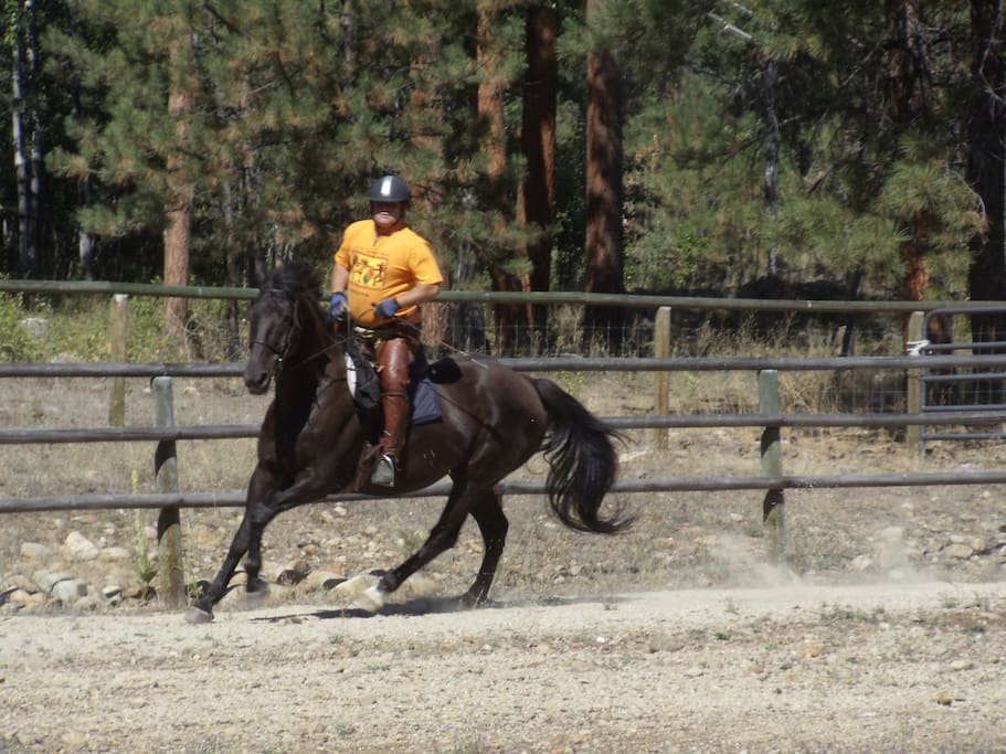 Chubasco is my Holsteiner jumping horse. We competed all over the US.