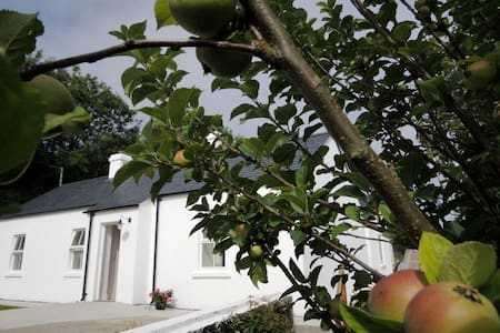 Sally's Garden Cottage  - Warrenpoint - House