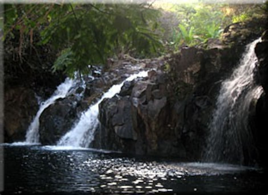 Nearby waterfalls and swim pond, accessed by stairs in the backyard and a short walk through the gorge.