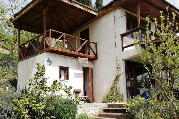 Olive Grove House in rustic village