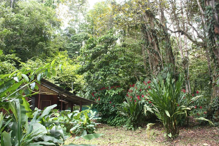 """casita"""" en la jungla de puerto viejo"""