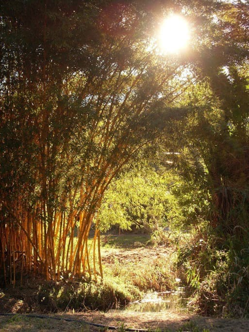 Extensive Organic Permaculture gardens