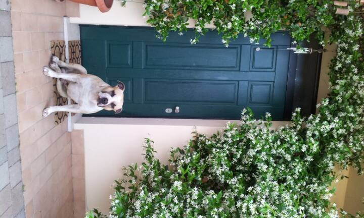 DOGS  friendly n. 2.  / 6 KM from Cremona