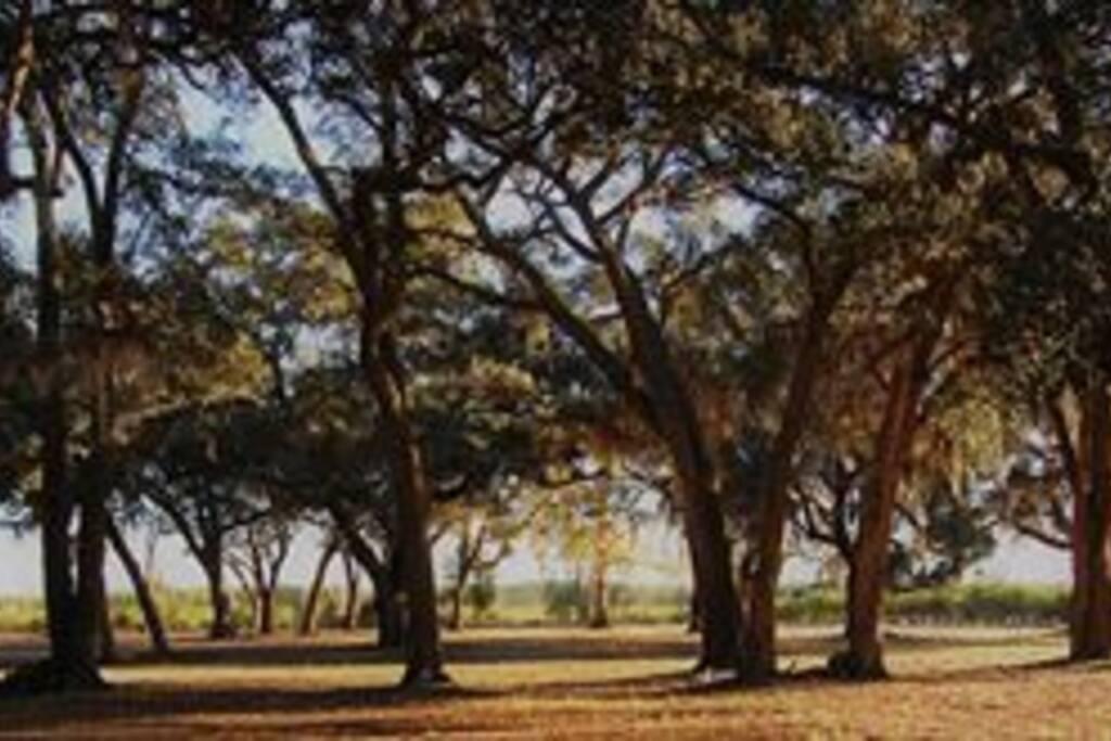 Massive Oaks cover Newell Grounds